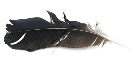 Plume d'oiseau sur fond blanc