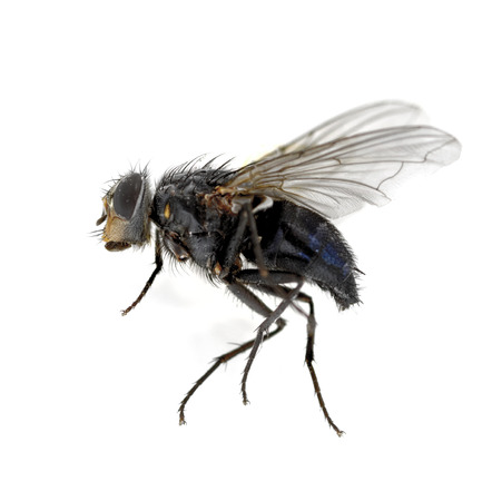 irritate: A macro shot of fly Stock Photo
