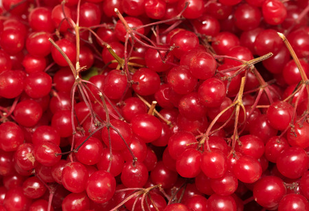 cranberry, cranberries, red rowan berries lot Stock Photo