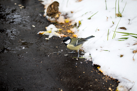 bird chickadee, winter landscape