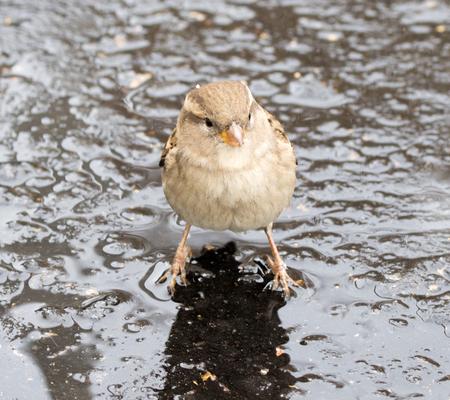 bird sparrow outdoors