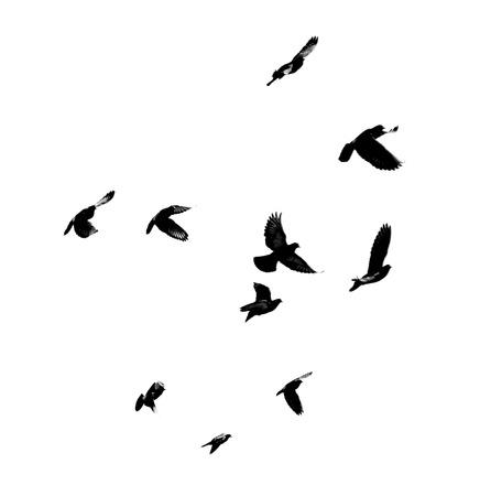 sagoma di piccioni in volo su sfondo bianco Archivio Fotografico