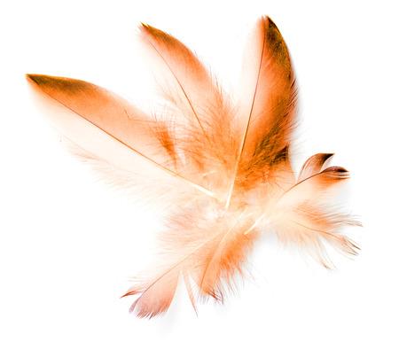 bird feather on white background Stock Photo