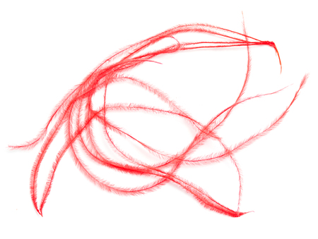 red feathers for the dress on a white background