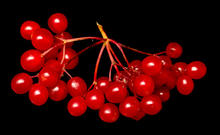 red berries viburnum on a black background Stock Photo