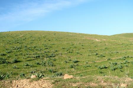 Green steppe hills