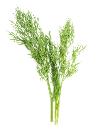 Green dill on white background Stock Photo