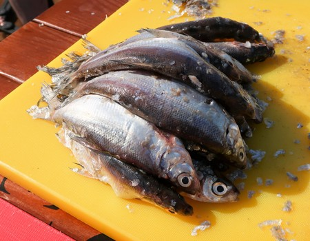 Coregonus peled - lakeside river fish, genus of whitefish