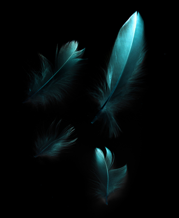 bird feather on black background