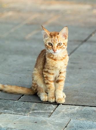 Homeless cat on the street
