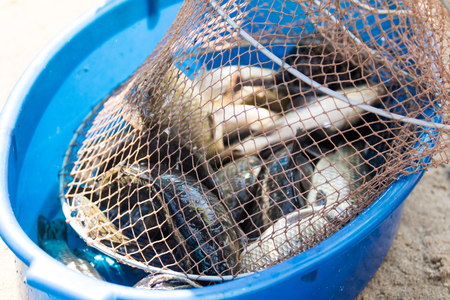 freshwater fish: Fish carp in a cage