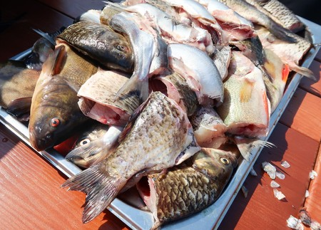 Freshly cleaned river fish Stock Photo
