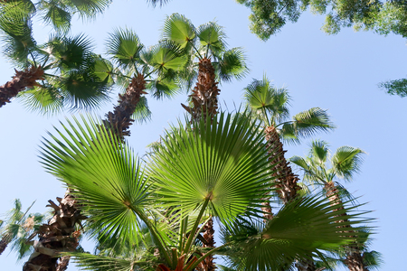 below: Palm trees view from below into the sky Stock Photo