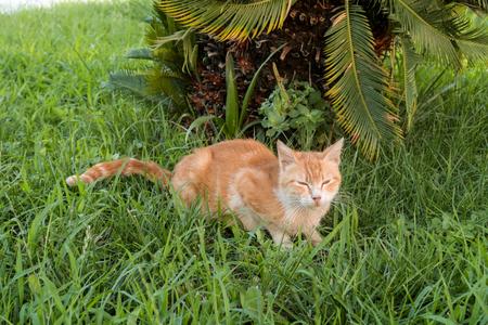 stray: Homeless cat on the street