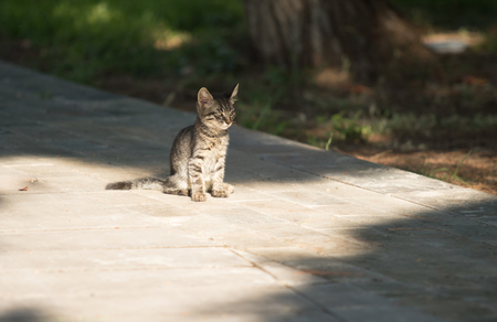 stray: Homeless cats outdoors in nature