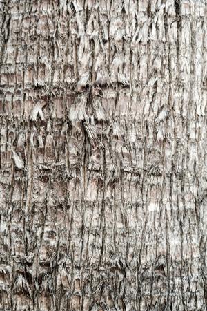 bark of palm tree: Tree bark palm trees background