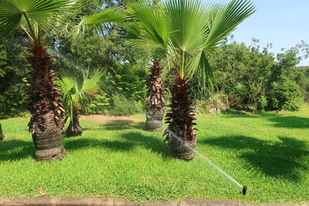 Small palm and green grass Stock Photo