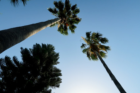 Palm trees view from below into the sky Stock Photo