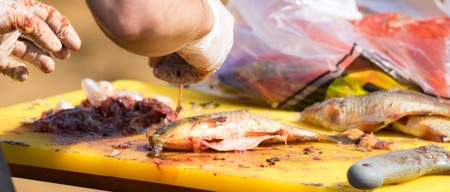 cleaned: Cut and clean the fish in gloves, defocused
