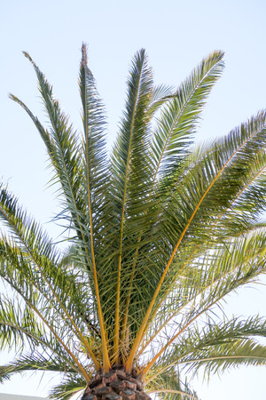 Palm and green grass
