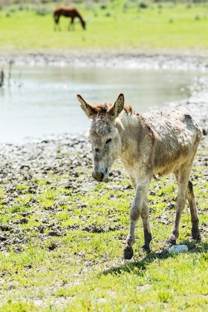 Donkey ass in nature