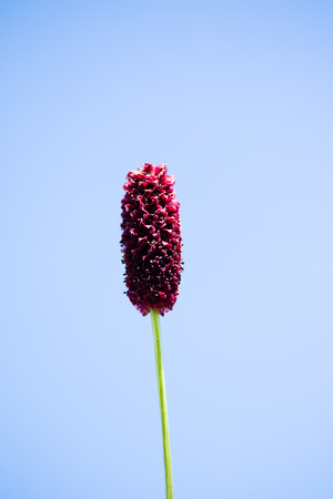 Flower purple coil Stock Photo