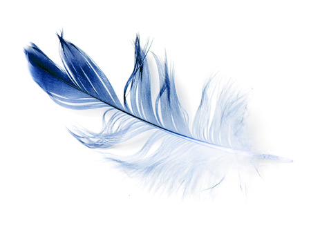 bird feather on white background Stock Photo