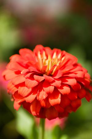 autumn bright flowers landscape Stock Photo