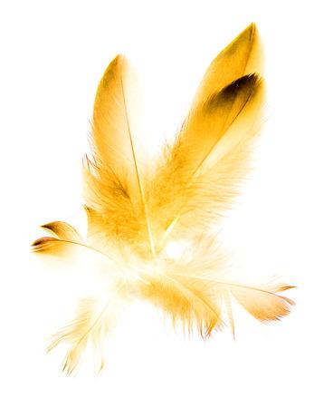 black textured background: bird feather on white background Stock Photo