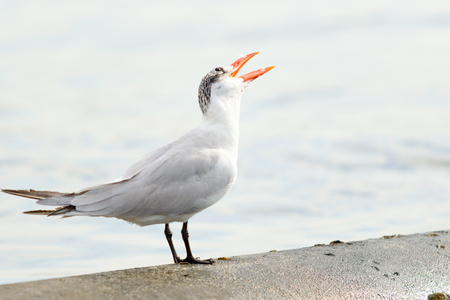 gull sits in the sea landscape Stock Photo