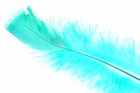 colorful bird feather on white background Stock Photo