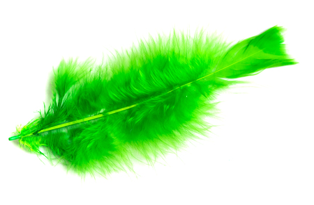 colorful bird feather on white background 写真素材