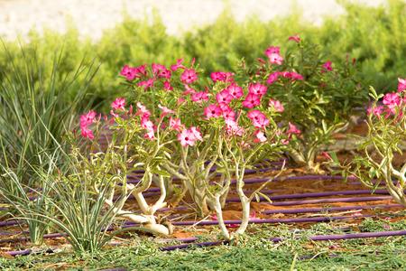 pink flowers landscape