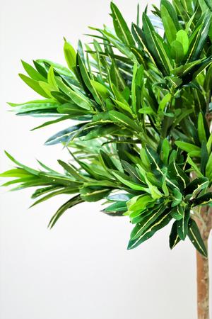 green plant tree interior