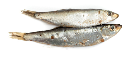 fish sprat isolated on white background
