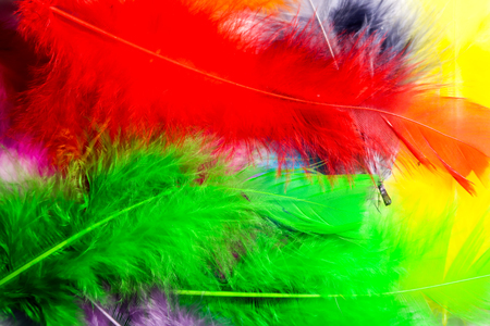bird feathers multicolored Stock Photo