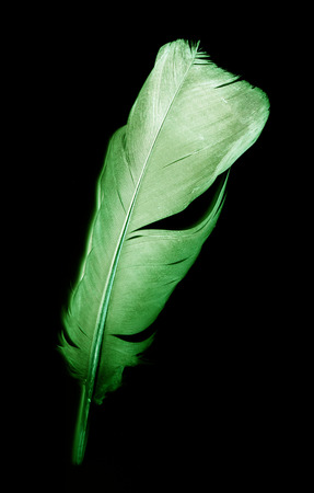 colorful bird feather on a black background