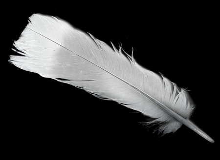 pigeon feather on a black background Stock Photo