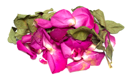 withered rose on white background Stock Photo