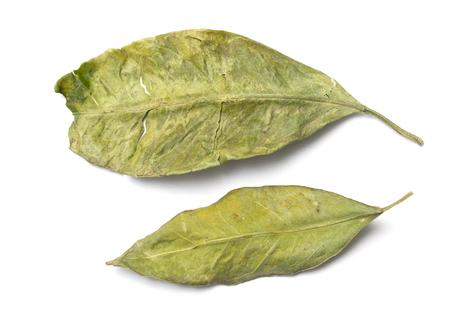 dry green leaf leaf on white background