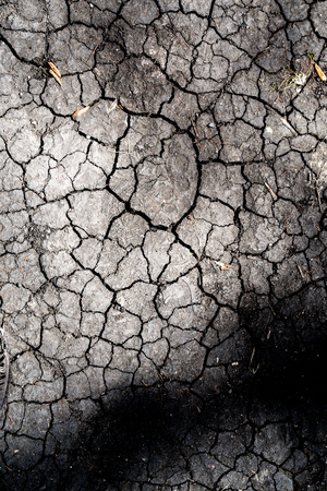 the land in the cracks is dry