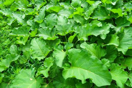 large green mug plant 版權商用圖片