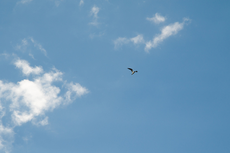 gull on a background of blue sky with clouds