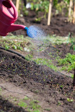 watering the garden with water spray with jets