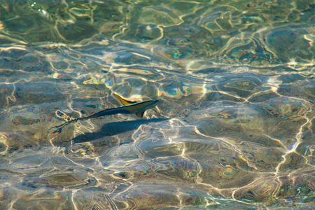 reef fish top view, defocused by water Reklamní fotografie