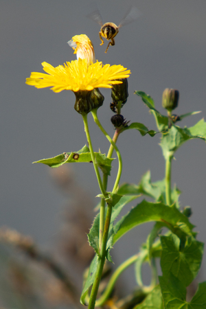 field flowers close-up Banque d'images