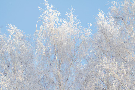 winter trees in the snow against the sky Stock Photo