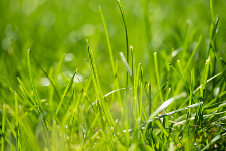 herbe verte avec un arrière-plan flou bokeh