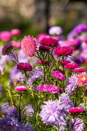 bright autumn flowers nature landscape Standard-Bild - 124970301