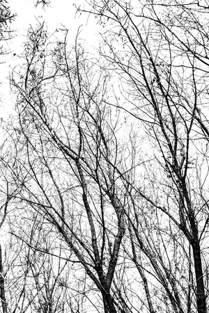 tree branches silhouette on white background